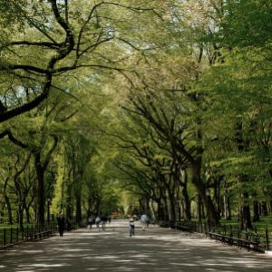 Path in Central Park, the most visited urban park in the United States and one of the most filmed locations in the world.
