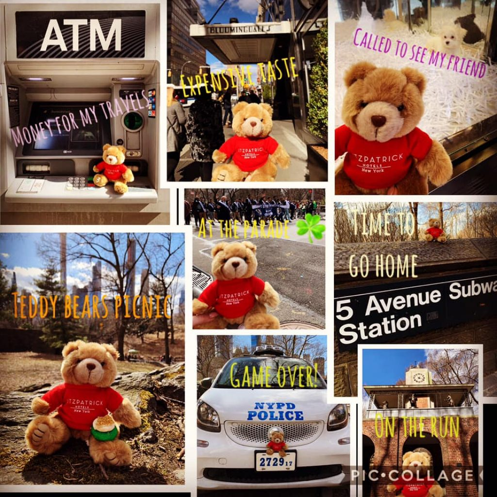Teddy bear Teddy Fits selfies at New York attractions and sights