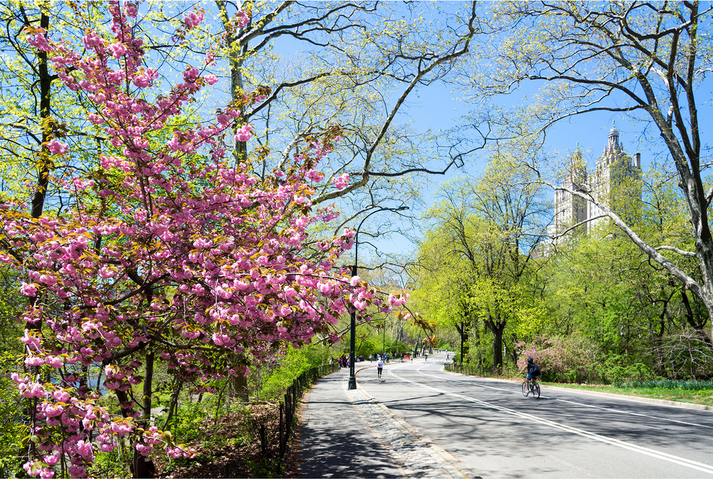 Pink spring flowers in foreground with paved road and green trees in background against blue sunny sky