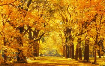 Central Park walk path framed with golden autumn trees